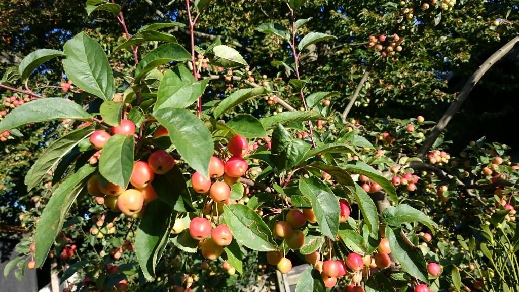 Smedens have Udsholt Apfelbäume